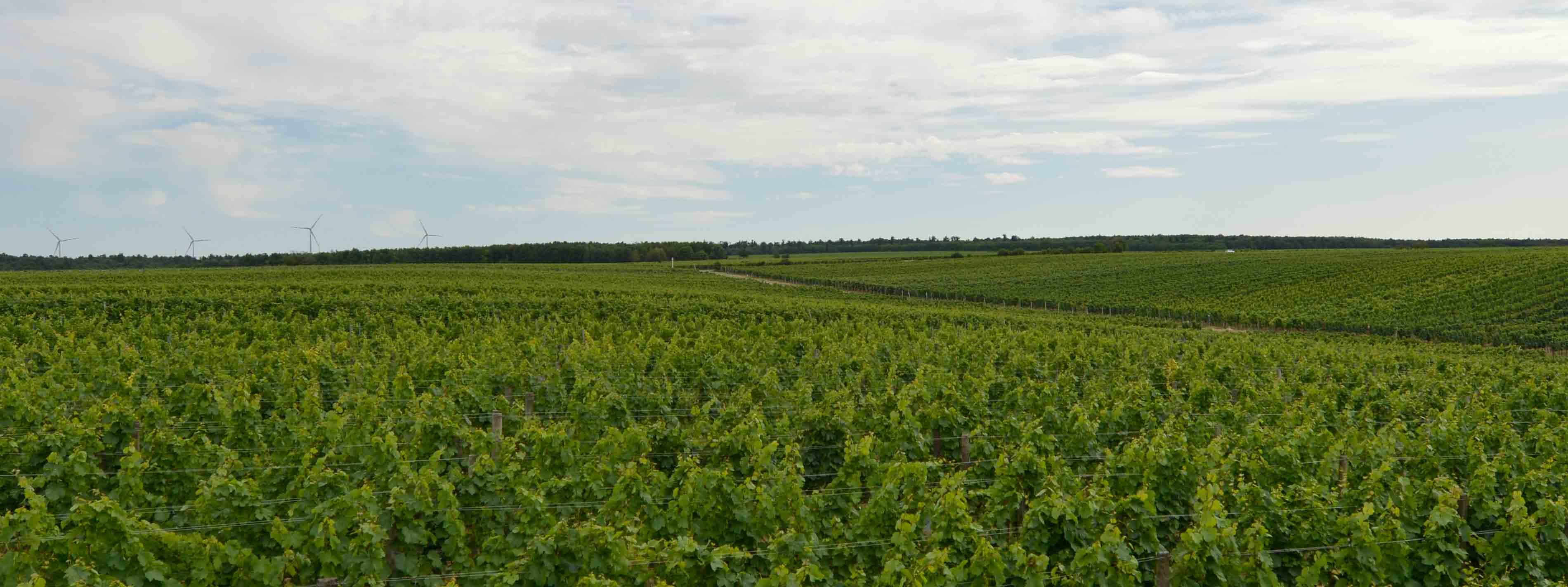Weingaerten Deutschkreutz